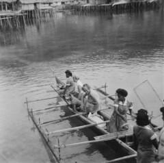 Japen 1958-018 (Stichting Papua Erfgoed) Tags: papua nieuwguinea nederlandsnieuwguinea irianjaya stichtingpapuaerfgoed papuaheritagefoundation westirian irianbarat pace newguinea