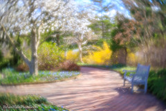 I found Spring! (Brian M Hale) Tags: tower hill botanic botanical garden boylston ma mass massachusetts newengland new england usa spring soft focus softfocus lensbaby velvet velvet56 56 56mm brian hale brianhalephoto outside outdoors nature natural foliage flowers plants trees