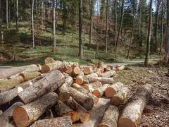 Logs (sander_sloots) Tags: logs trees illnau zwitserland switzerland forest bos boomstammen bomen stapel stack dieschweiz suisse