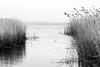Leichter Wind - Breeze (Rainer ❏) Tags: leichterwind breeze ruhe calm landschaft landscape reed schilf ostsee balticsea usedom horizont achterwasser wasser mecklenburgvorpommern bw sw bn xt2 rainer❏