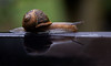 Snail reflected (Graeme Andrews) Tags: snail waterreflections reflections 100mmf28wrmacro pentax photoshop