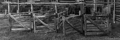 Maraekakaho Woolshed (rossmberry) Tags: maraekakahowoolshed hawkesbay newzealand black white sheep antique old yards