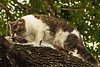 Investigation (Ellsasha) Tags: felines cats gatos trees climbing climber