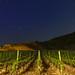 Wine Field in Bremm/Germany