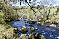 River Dart (Dave_S.) Tags: water river flow flowing current sun sunny sunshine spring dart dartmoor trees bank banks bed rock devon england uk gb nikon d7200 great britain united kingdom