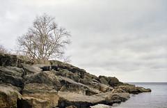 Lake Ontario (azhukau) Tags: nature lake lakeontario rockobject coastline outdoors beach landscape scenics sky water blue nopeople cloudsky watersedge tree lakescape wave summer weather beautyinnature greatlakes analog analogphotography film kodak porta800 zeissikonercona novonar11045 vintagecamera