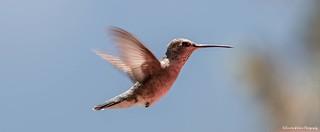 Wonderful morning to be a hummingbird.