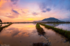 槟城大山脚倒影 (Marcus Lim @ WK) Tags: landscape hill mountain nikon reflection sunrise burning cloud cloudy water paddy