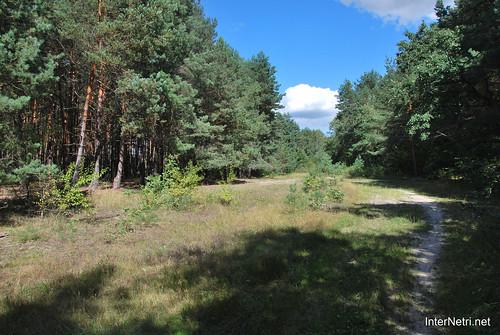Волинський ліс Лісова дорога InterNetri Ukraine 0316543531