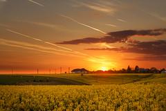 Rapseed sunset (Adrian Mitu) Tags: rapseed sunset sun fields agriculture airplane trails clouds sky romania travel landscape