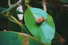 Voice of garden. (Blesson Miracle Mathew) Tags: voice garden photography bangalore bee bees blesson mathew miracle bumblebee colour green hd photos hum india insect leaf nature stock image vsco wasp