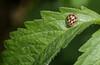 mon petit jardin (zabou256 aussi sur Ipernity) Tags: monpetitjardin jardin garden garten insecte insectes insect insects insekt coccinelle