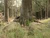 Schierke_e-m10_1019021991 (Torben*) Tags: olympusm1442mmf3556iir olympusomdem10 rawtherapee harz schierke baum tree stamm trunk felsen rocks