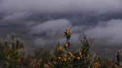 DSCN1223 (liptvs) Tags: flores valle