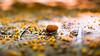 Snail Run (Thomas TRENZ) Tags: austria nikon thomastrenz vienna dxonfx iamnikon macro nature nikonat nikonaustria nikonlove orange photography runner running snail speed spring yellow