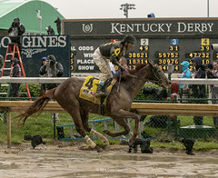 Gallop Out (Casey Laughter Media) Tags: 2018copyright churchilldowns kentuckyderby winner kentucky louisville canon canon7dmii canonphotography canonusa canonlens action actionphotography sports sportsphotography thoroughbred racehorse horse horseracing weather wet rain