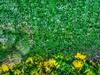 Granizada (FOTOS PARA PASAR EL RATO) Tags: ventana cdmx pasto agua granizo lluvia