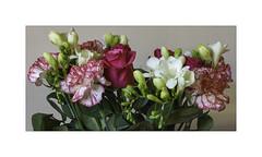 Bouquet d'anniversaire (Gérard Boisnard) Tags: nature fleurs fleur flore flowers bouquet anniversaire boisnard
