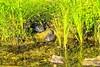 European pond turtle (a7m2) Tags: natur danube europa nationalparkdonauauen turtle schildkröte wandern erholung naturschutz travel tourismus