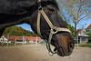 Marbach (FocusPocus Photography) Tags: marbach hauptundlandgestüt badenwuerttemberg pferd horse wuerttembergerwarmblut wuerttembergerwarmblood tier animal