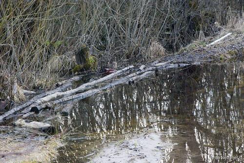 Волинське болото InterNetri Ukraine 10