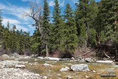 Beside the Little Bighorn (kevin-palmer) Tags: littlehorncanyon bighornmountains bighornnationalforest wyoming nikond750 spring april tamron2470mmf28 sunny blue sky backpacking littlebighornriver river flowing water pinetrees boulders clouds
