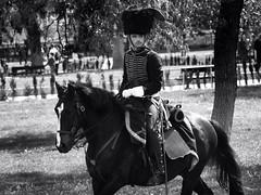 Hussar (Fencejo) Tags: canon600dt3ikissx5 canonef100300mmf4556usm blackwhitebwstreetcityblackandwitestreetphotographymonochrome lossitios zaragoza horse cs3