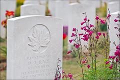ranville (heavenuphere) Tags: ranville caen lisieux calvados normandie normandy france europe ranvillewarcemetery war cemetery worldwarii 24105mm