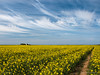 A Field up North (MAN1264) Tags: rapeseed isleofman sky summer barrymurphyphotography andreas