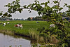Frysian landscape near Grote Wiske ... (9892) (Le Photiste) Tags: clay frysianlandscapeneargrotewiskefryslânthenetherlands frysianlandscape fryslânthenetherlands thenetherlands nederland cows landscape waterscape nature naturesprime rainbowofnaturelevel1red planetearthnature planetearth ngc meadow water grass simplygreen afeastformyeyes aphotographersview autofocus artisticimpressions blinkagain beautifulcapture bestpeople'schoice bloodsweatandgear creativeimpuls cazadoresdeimágenes canonflickraward digifotopro damncoolphotographers digitalcreations django'smaster friendsforever finegold fairplay greatphotographers groupecharlie peacetookovermyheart clapclap hairygitselite ineffable infinitexposure iqimagequality interesting inmyeyes lovelyflickr livingwithmultiplesclerosisms lovelyshot myfriendspictures mastersofcreativephotography niceasitgets photographers prophoto photographicworld photomix soe simplysuperb saariysqualitypictures showcaseimages simplythebest simplybecause thebestshot theredgroup thelooklevel1red vividstriking worldofdetails wow yourbestoftoday grotewiskefryslânthenetherlands green agriculture musictomyeyes ditch