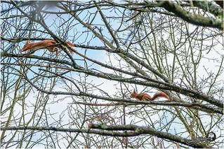 L'écureuil du jardin