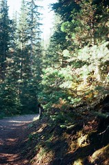 Cnd-10 (Tanit | buyitinpacks) Tags: 35mm canonae1 canada roadtrip hike nature tree film kodakportra160