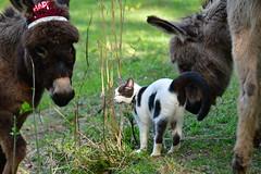 Dragon Fly Farm Donkeys 20180502 20180501  DSC_3087 Cat Happy Birthday (Shane's Flying Disc Show) Tags: donkeys catdragonflyfarm