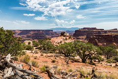 The Wonders of Canyonlands (Ron Drew) Tags: nikon d800 canyonlandsnationalpark nationalpark utah moab trees clouds lasalmountains rockymountains cliffs butte mesas landscape outdoor summer desert vista islandsinthesky mountains canyons dappledlight