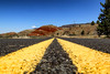 On the road to Painted Hills (erichudson78) Tags: usa oregon paintedhills paysage landscape route road canoneos6d canonef24105mmf4lisusm grandangle wideangle hills collines convergence lignes lines yellow jaune