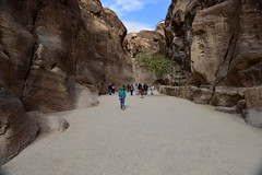 The Siq, Petra, Jordan, January 2018 977 (tango-) Tags: giordania jordan middleeast mediooriente الأردن jordanien 約旦 ヨルダン
