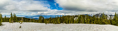 West Vancouver (jamiepacker99) Tags: 2018 canonef24105mmf4lisusmlens spring blackmountain canoneos6d westvancouver may trees snow landscape vancouver howesound bc canada