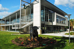 USF 24-Hr Fitness Center (Infinity & Beyond Photography) Tags: usf university south florida 24hr fitness center building architecture bull statue sculpture bulls