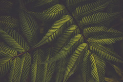 Texture (der_peste (on/off)) Tags: leaf leaves nature texture dark macro proxy matte green