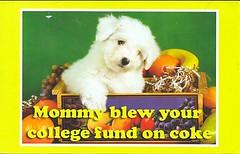 20 FireMaggie (Rocky's Postcards) Tags: puppy fruit basket breakingbadnews withbabyanimals mommyblewyourcollegefund postcard firemaggie