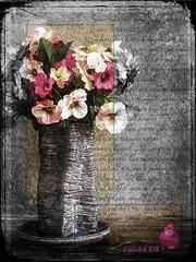 Challenge3 (clabudak) Tags: flowers challenge 3