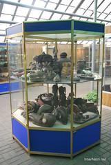 Екзотаріум Ботанічного саду імені Гришка, Київ InterNetri  Ukraine 20