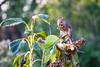 september 2017 lake katherine (timp37) Tags: lake katherine september 2017 illinois squirrel sunflower eating palos