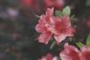 Vintage Garden (Aby Images) Tags: canon eos 100d 50mm garden vintage britanny finistère flowers