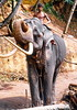 Elephant No. 2 Mahout riding high up (gerard eder) Tags: world travel reise viajes asia southasia srilanka ceylon elephant animals animales tiere mahoud rural rurallife agricultura agriculture landwirtschaft landscape landschaft paisajes outdoor