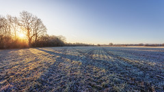 Winter Wheat (snomanda) Tags: field rural scene countryside sunrise fog sun trees sky morning light uk blue england winter wheat agriculture agricultural leading lines furrows cold frosty cross shadows horizon intersections crossing crisscross