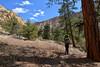 Up Box (Brandon Rasmussen) Tags: utah dixienationalforest boxdeathhollowwilderness thebox escalantebox hiking backpacking canyon desert landscape nature southwest americansouthwest nikond7100 nikkor1224mmf4g 1224f4