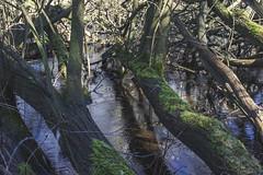 Marécage (StephanExposE) Tags: marestsurmatz oise france eau water étang lake nature arbre tree canon 600d 1635mm 1635mmf28liiusm