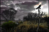 The Rain Has Gone (Dawnsview) Tags: clearly gracevanderwaal rain storm clouds darkclouds trees bird outdoors landscape river rillito flying song music dawnsview hope change woke