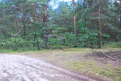 Волинський ліс Лісова дорога InterNetri Ukraine 0913936015